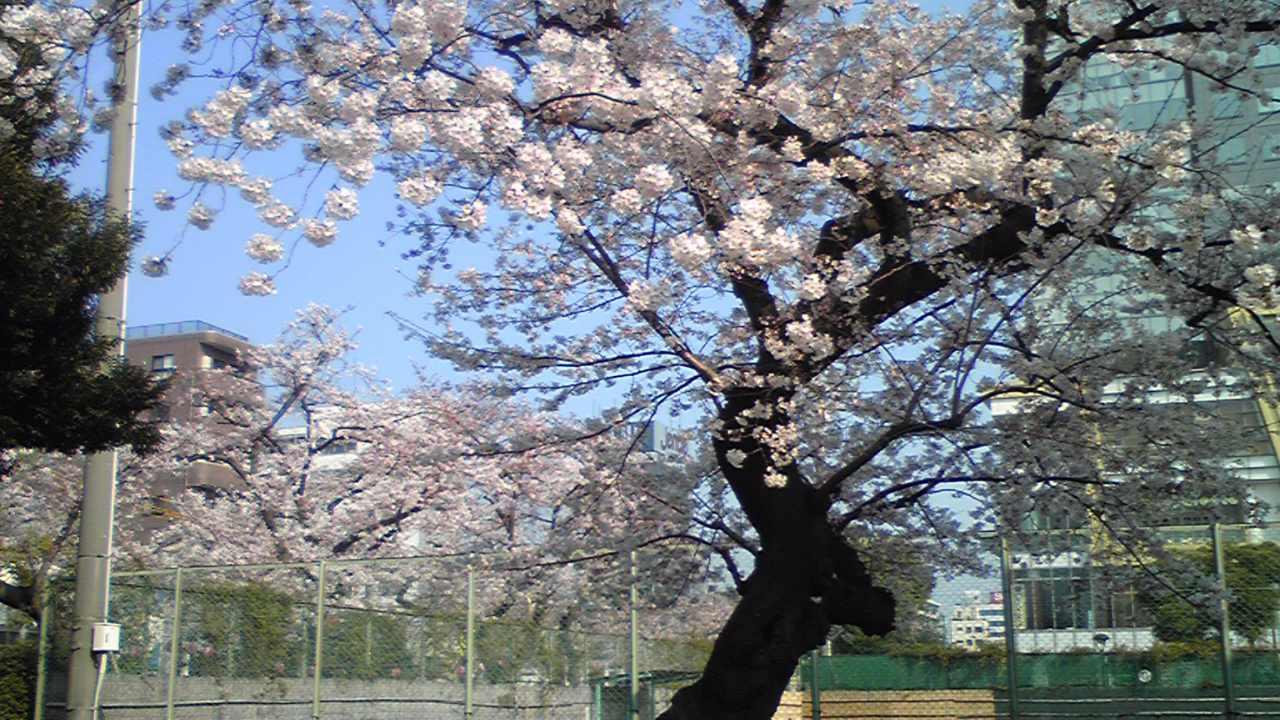 今日も錦糸公園に寄ってみました。